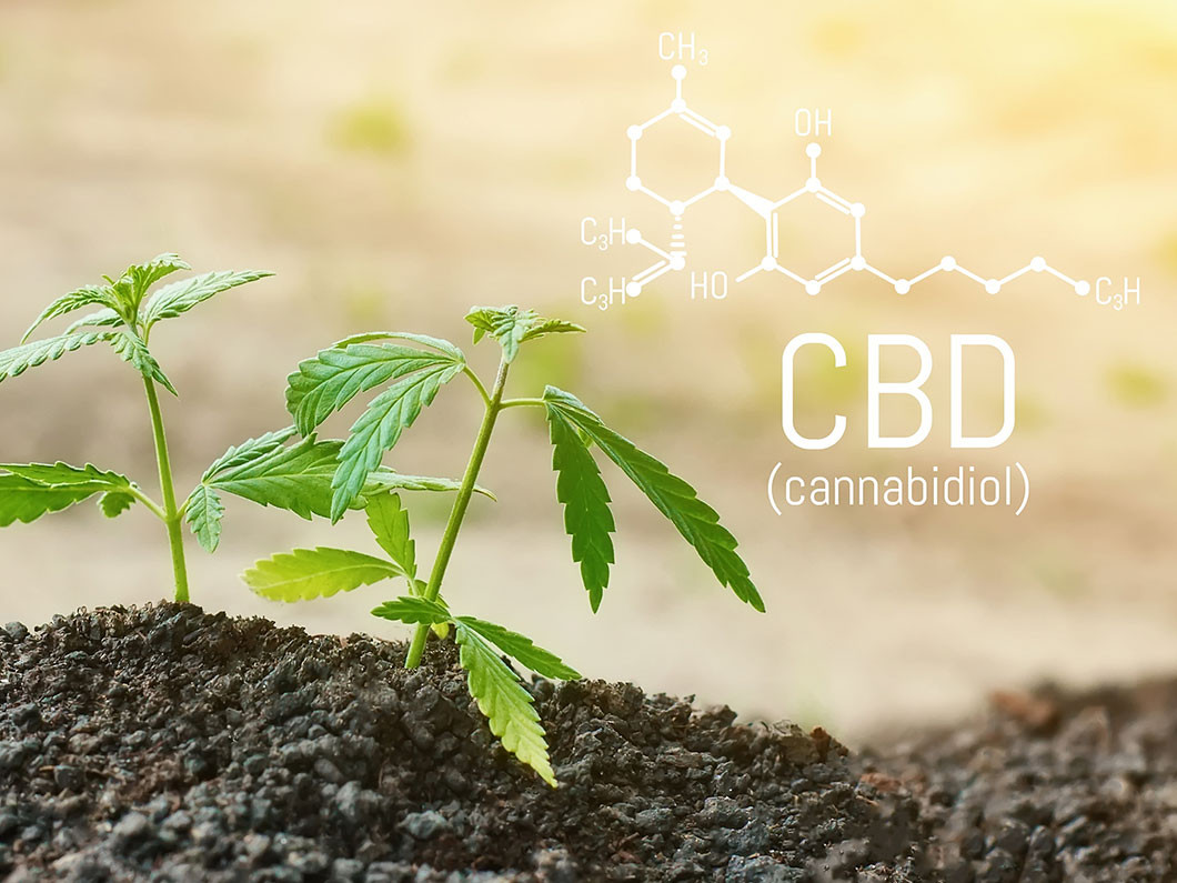 What are the uses of CBD?